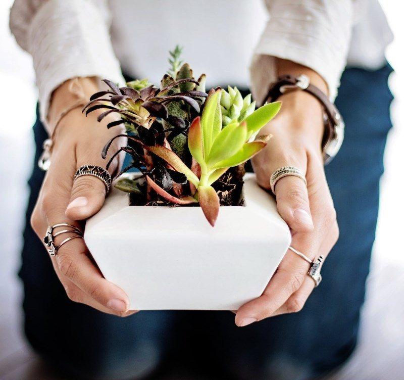 Handing Plants